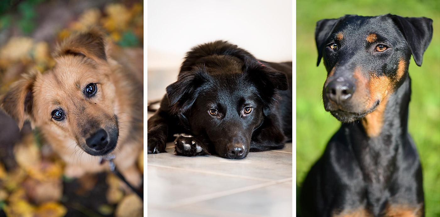 v. l. n. r.: NaLa, Olly und Ike - Drei wunderbare Hunde in Trier - Fellkinder in Not