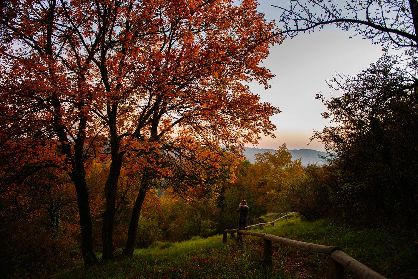 Fotowanderung mit Hund und Julia: Trier im Herbst