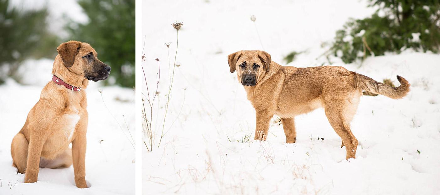 Trudi im Schnee: Hundefoto für Fellkinder in Not (85mm, f/2.0)