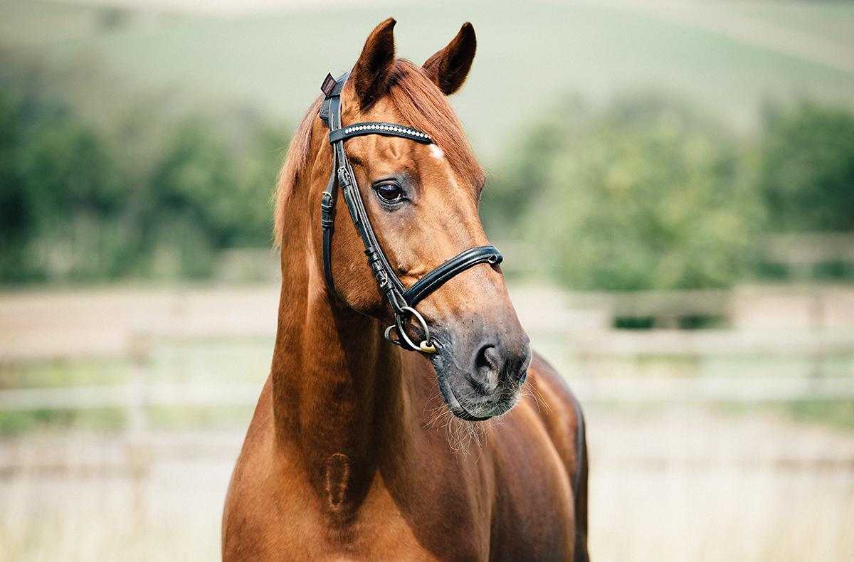 Pferdeshooting in Trier - Fotoshooting mit Pferd