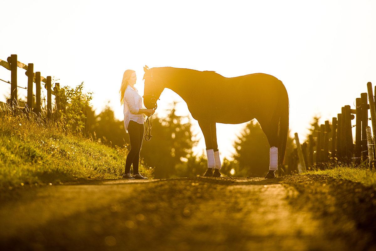 Pferdeshooting im Gegenlicht