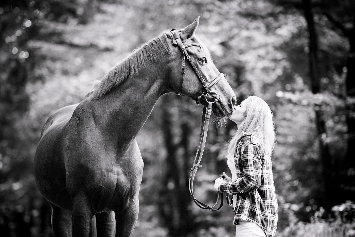 titelbild-pferdefotografie